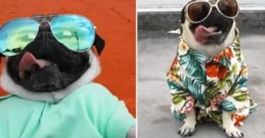 """Fotos, Curiosidades, Comunicação, Jornalismo, Marketing, Propaganda, Mídia Interessante despacito-dog-pug-450x270 """"Despacito"""" versão canina Humor Internet  despacito dog despacito cachorro"""