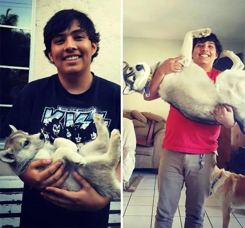 dogs growing up before after user submissions 102 594a8b3cc9546  700 - Fotos de cachorros adultos quando era filhote destaca-se nas redes sociais