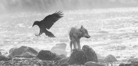 lobos do mar natureza - National Geographic: Lobos do mar