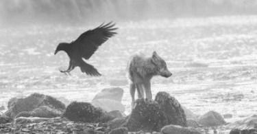 lobos do mar natureza - As melhores fotos de iPhone de 2017
