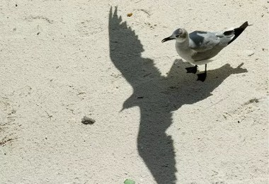 sombra passaro - Sombras e suas projeções