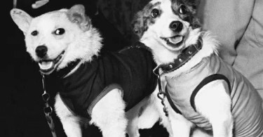 animais no espaço soviet space dogs 1 - Veja como foi filmado esta cena do Tigre em The Walking Dead