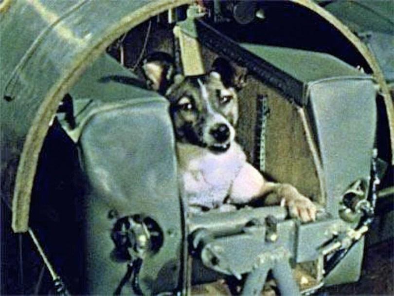 Cachoros no espaço