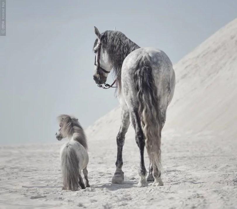 cavalos selvagens fotos profissionais  - Fotos lindas capturadas de cavalos selvagens