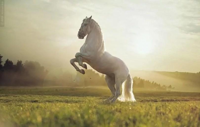 cavalos selvagens fotos profissionais 11 - Fotos lindas capturadas de cavalos selvagens