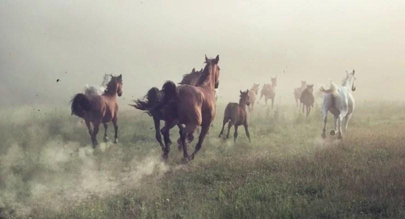Fotos, Curiosidades, Comunicação, Jornalismo, Marketing, Propaganda, Mídia Interessante cavalos-selvagens-fotos-profissionais-4 Fotos lindas capturadas de cavalos selvagens Fotos e fatos Marketing  cavalos selvagens