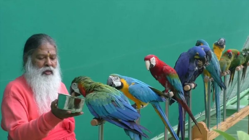 maior aviario do mundo - O maior aviário do mundo - O aviário mágico