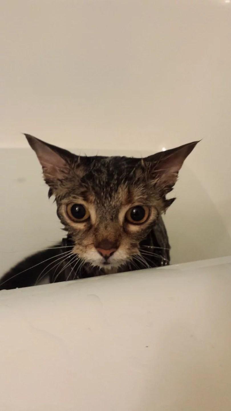 cachorros tomando banho gato pets11 - Pets e a hora do banho!