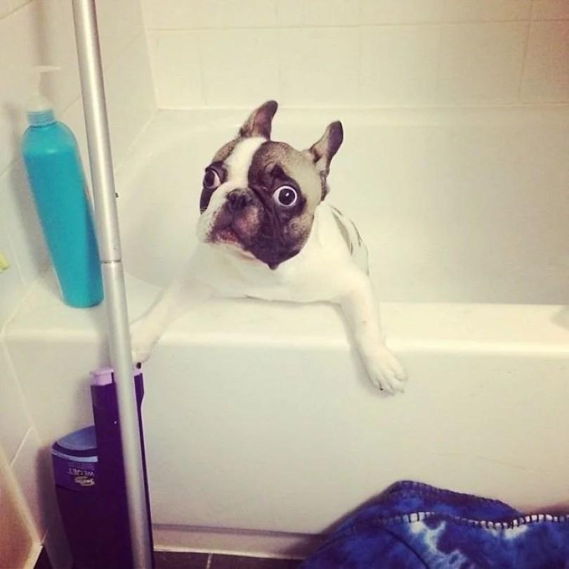 cachorros tomando banho gato pets5 - Pets e a hora do banho!