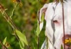 cao abandonado foto - Fotógrafa tira fotos de cães abandonados em abrigo