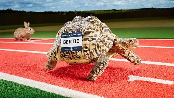 fastest tortoise header tcm25 395304 - Qual a tartaruga mais rápida do mundo?