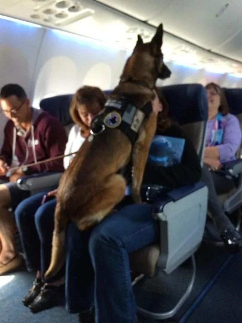 animais em voo permitido avião 02 - Afinal, é permitido animais em voos dentro do avião?