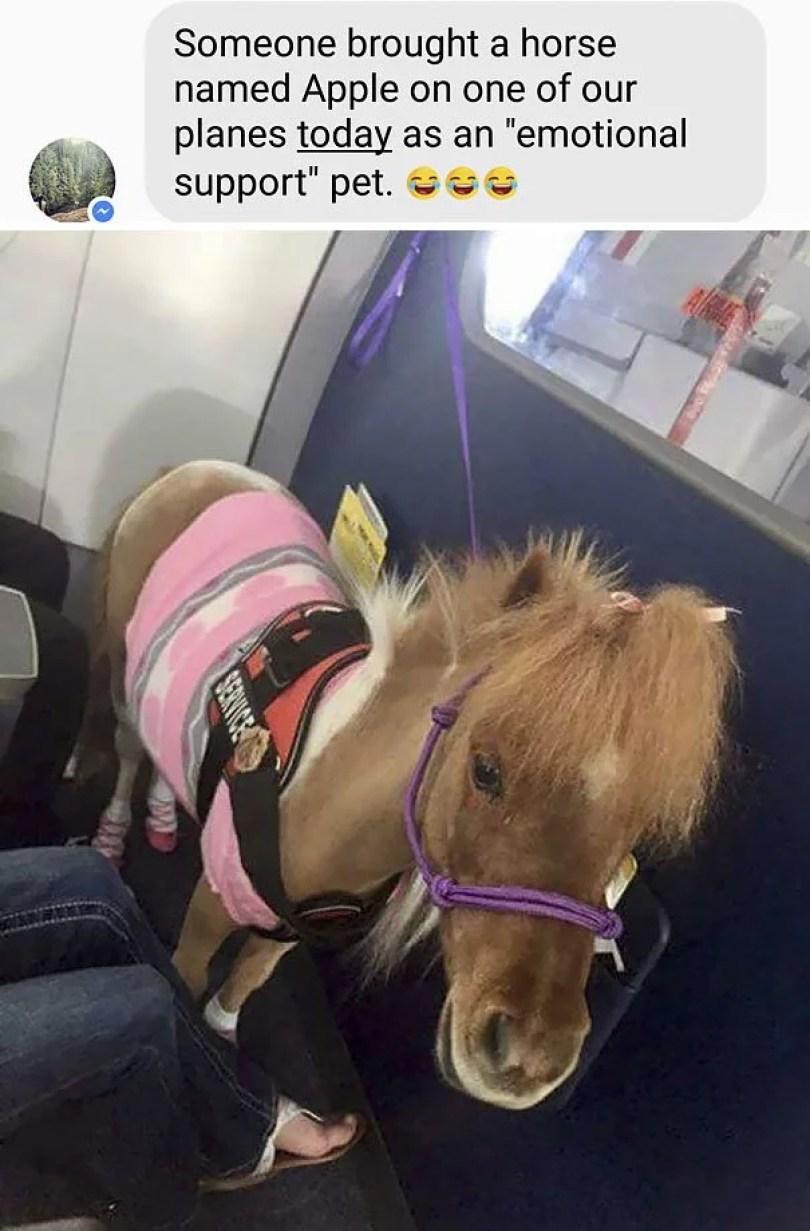 animais em voo permitido avião 07 - Afinal, é permitido animais em voos dentro do avião?