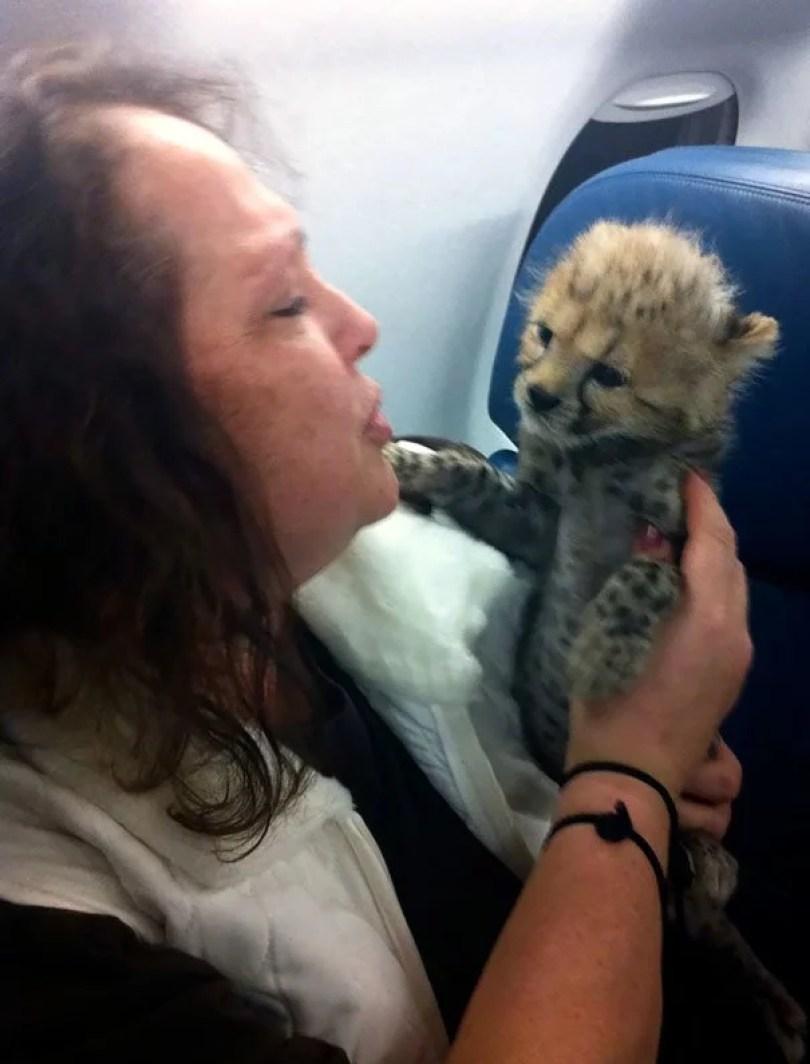 animais em voo permitido avião 29 - Afinal, é permitido animais em voos dentro do avião?
