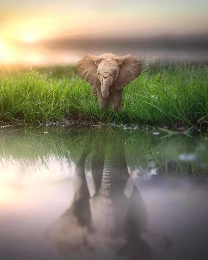 animals gigants 08 - Photoshop: Imagine um mundo com animais gigantes