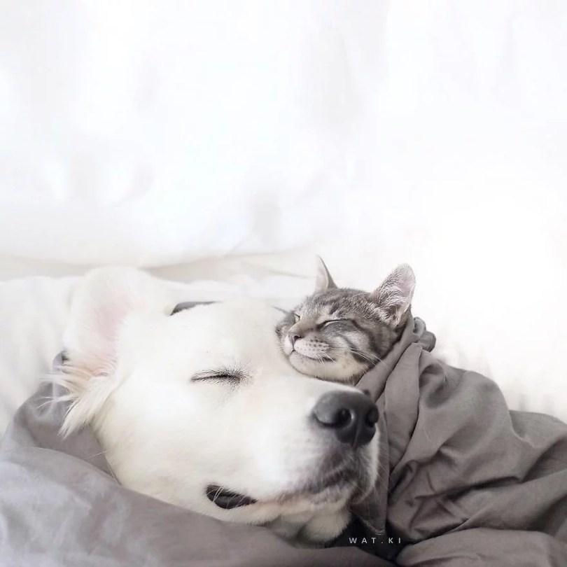 caes e gatos amigos7 - Book fotográfico de cães e gato melhores amigos