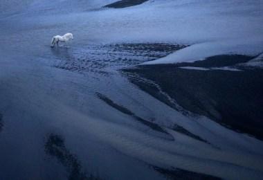 Cavalos da Islândia