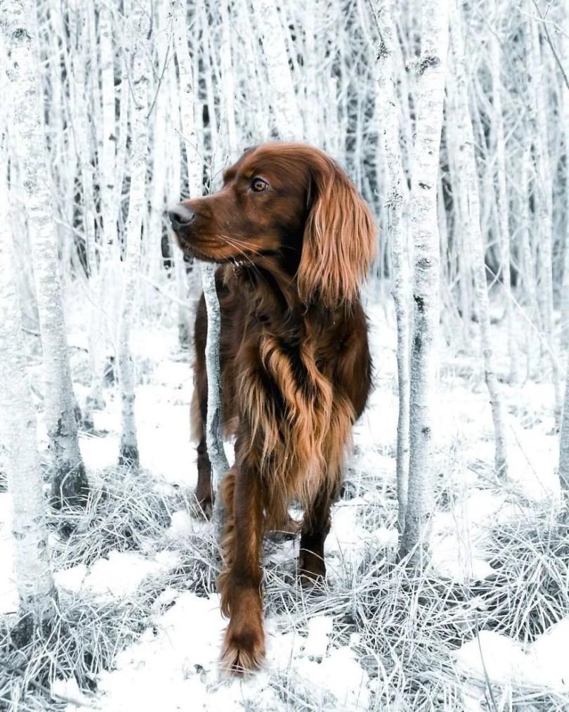 foto de cachorro 17 - Foto de cachorro: Dono faz book fotográfico de seu cão