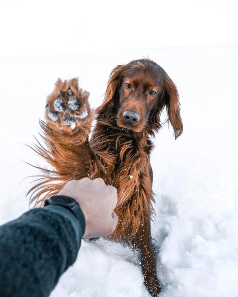 foto de cachorro 21 - Foto de cachorro: Dono faz book fotográfico de seu cão