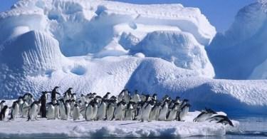 fatos sobre a Antártica