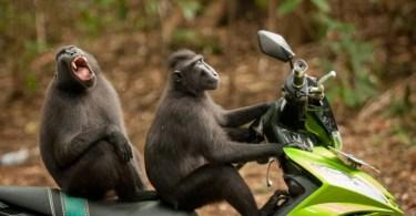 macacos na moto engraçado mundo animal - As maiores coincidências do mundo registradas em foto #Parte 2