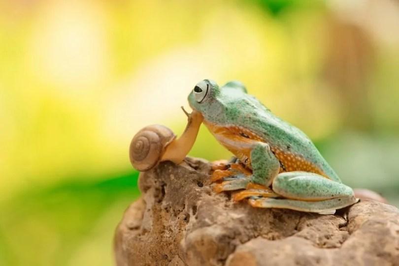 """Andy Darmawan AGORA images The Snail kisses the Frog Indonesia As pessoas enviaram suas fotos pequenas para o concurso internacional de fotografia e aqui estão as melhores 50 inscrições - 50 Fotos do Concurso Internacional 2019 no segmento """"Micro"""""""