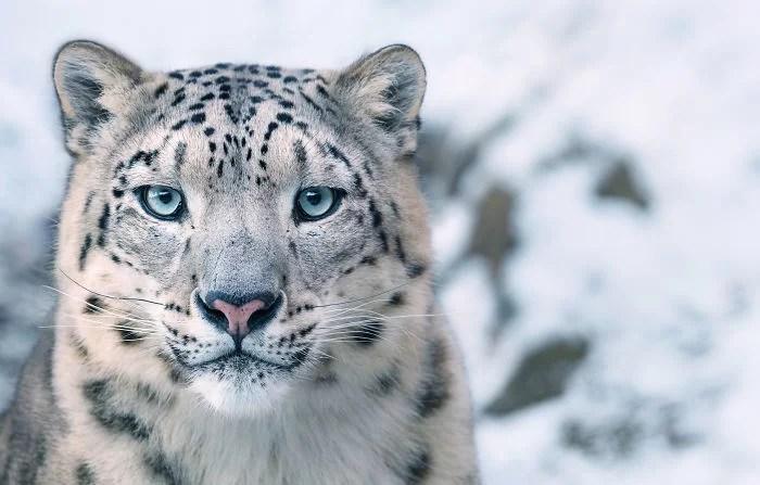 Animais que podem ser extintos Fotógrafo profissional tirou fotos incríveis - Fotos Incríveis de animais que podem em breve ser extintos
