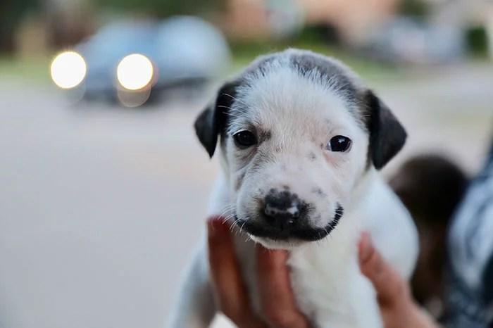 cachorro bigode