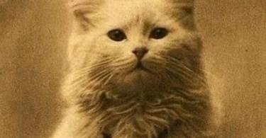 primeria foto deum gato - Os melhores Tuning de carros