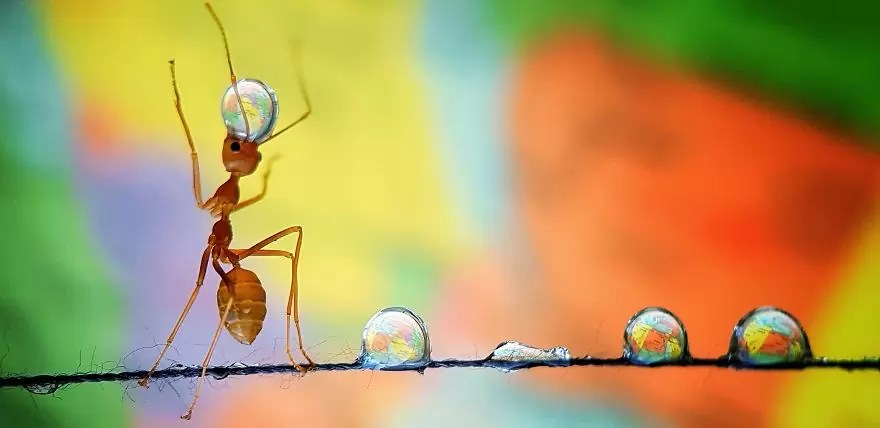 Ant balancing the earth by anadgphotography Philippines Analiza De GuzmanAGORA images 5d6fc60343b30  880 - As imagens mais inacreditavelmente incríveis de 2019