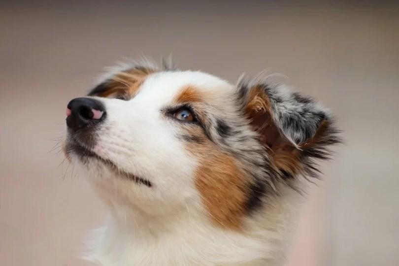 cão viu porta aberta da igreja - O que fez o cachorro ao ver a porta da igreja aberta?