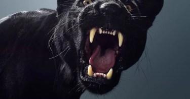 Este fotógrafo revelou os diferentes personagens de grandes felinos através de retratos impressionantes - Ele fotografou Cosplayers e os inseriu em Pôsteres