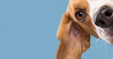 """Eu fotografei esses 20 cães adoráveis e eles estão checando como você está indo 07 - Instagram """"Bom Pra Cachorro"""" de Elke Vogelsang"""
