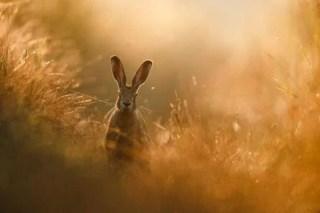 Peter Lindel é o fotógrafo de natureza GDT do ano 2020 - As melhores fotografias da Natureza - Concurso GDT 2020