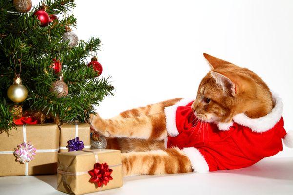 Gato brincando com presente