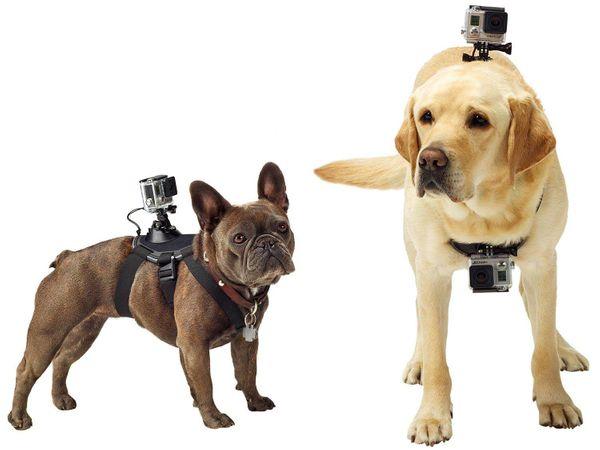 Acessórios tecnológicos para os pets