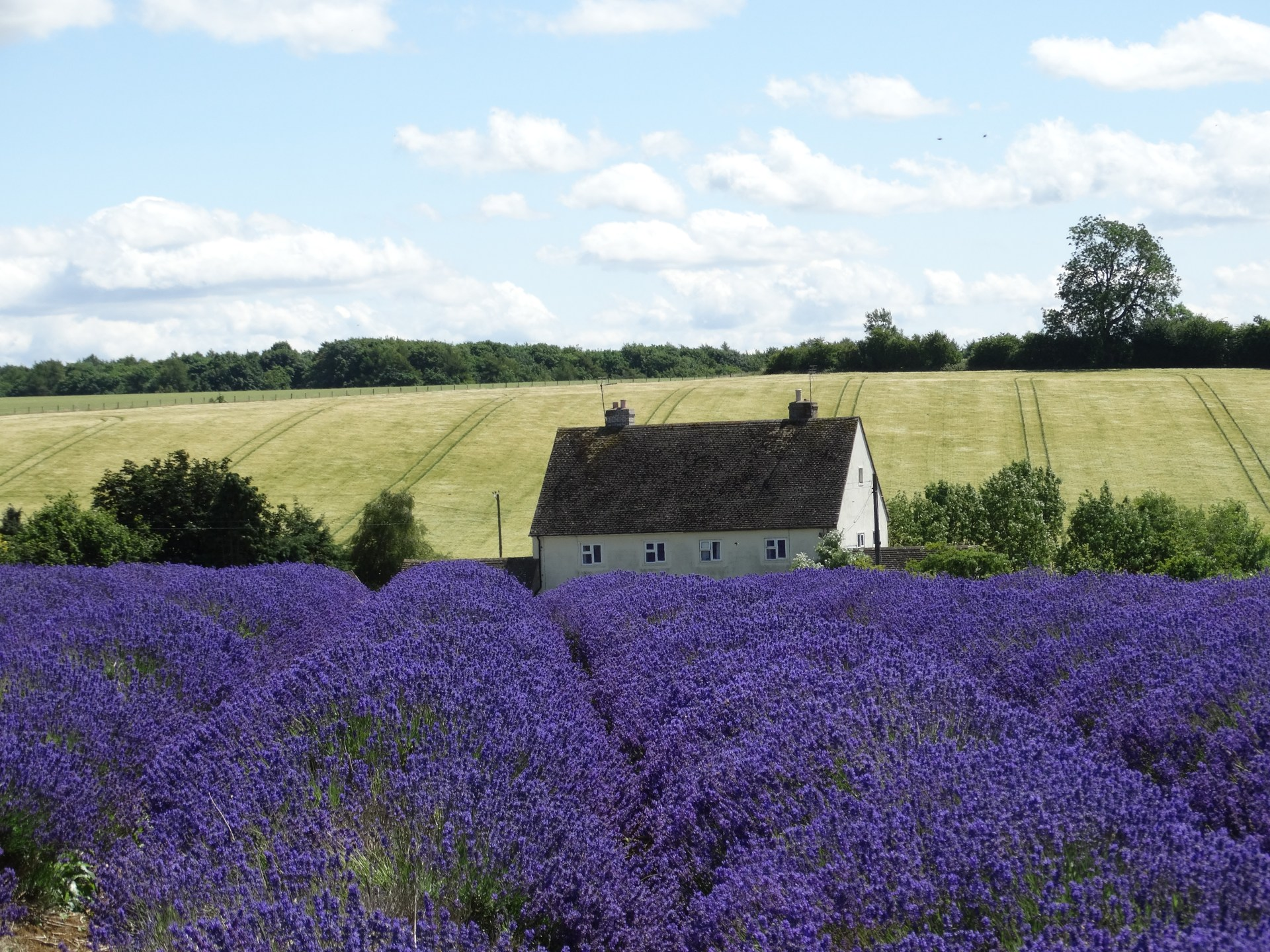 Visiting Snowhill Lavender Farm in Cotswolds