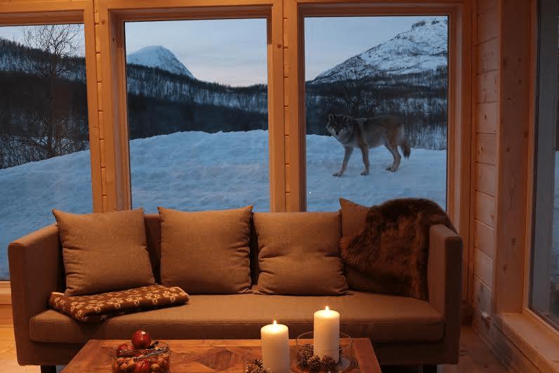 wolflodge