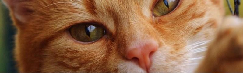 capa_kitty