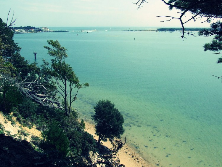 Things to do in Dorset | Visiting Brownsea Island