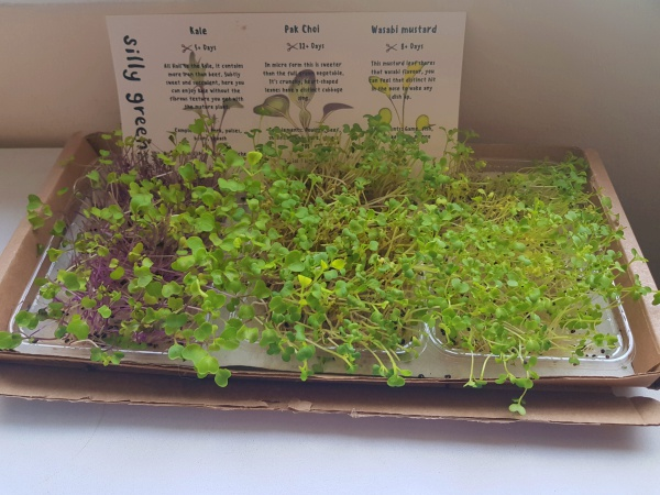 Silly Greens | Growing Micro Herbs at Home