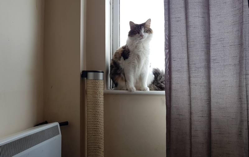 Review | Wall-Mounted Cat Scratcher by Catipilla