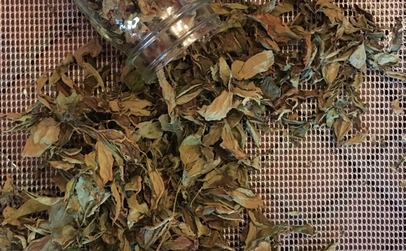 Basil Dried in Excalibur Dehydrator