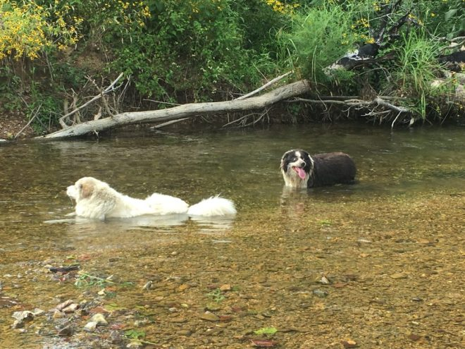 Solitude ~ Dogs Enjoying the Creek