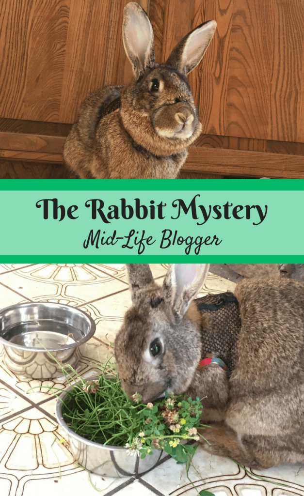 The Rabbit Mystery