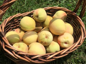 Mid-Life Blogger's Peach Cobbler