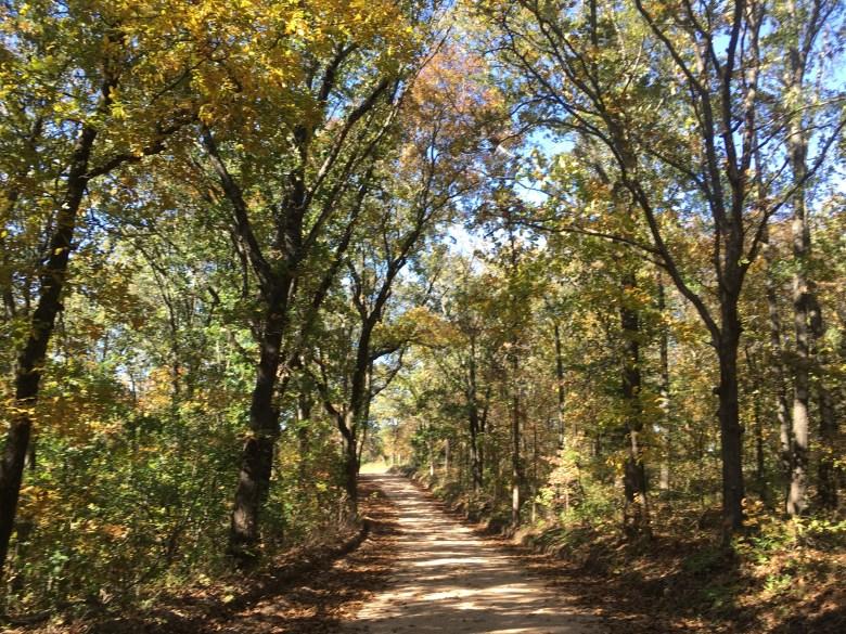 In Defense of Leaves