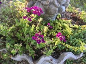 From Birdbath to Planter