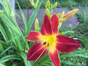 Friendly Flowers ~ A Poem