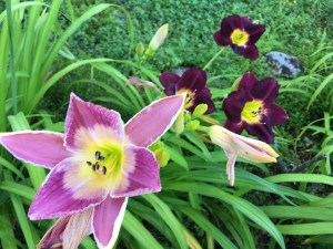 Gardening ~ The Slowest Fine Art